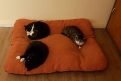 Für drei ist auch Platz
